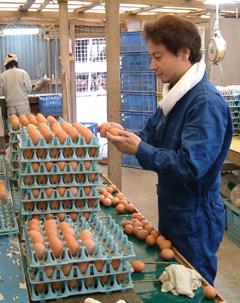 egg-select